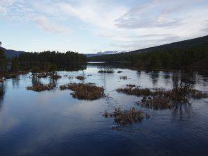 Solnedgång Skurdalen 2010