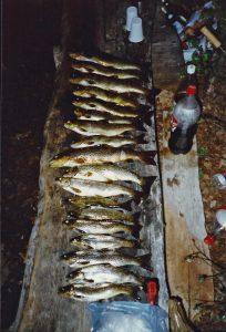 En natts fångst Skurdalen 1997